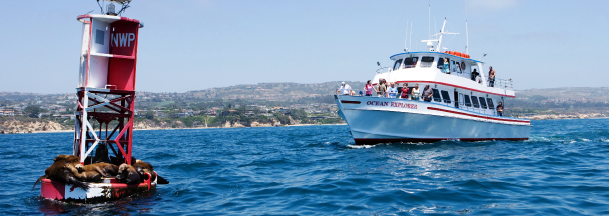 affordable-whale-watching-catalina-island